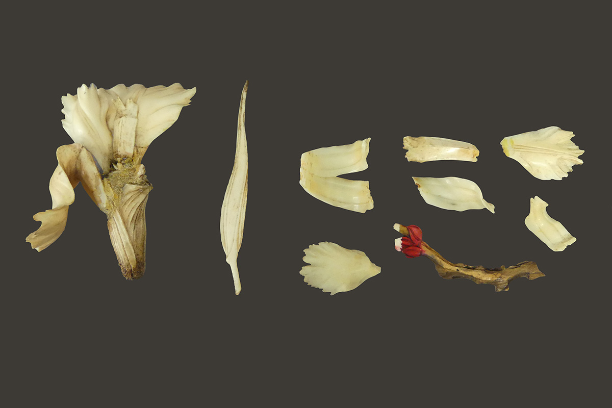 Photograph of damaged ivory flower before treatment