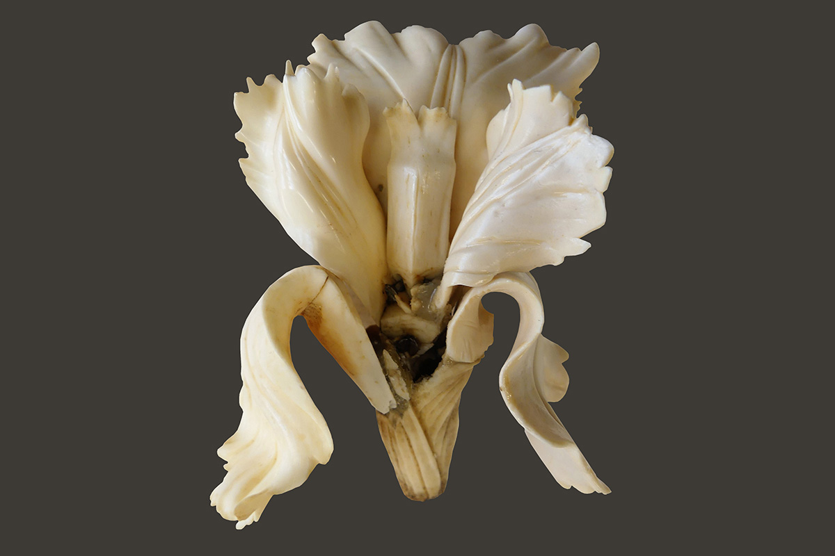 Photograph of ivory flower during treatment