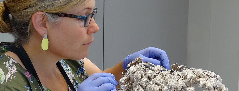 Objects conservator examining decorative silver